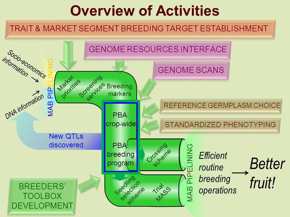 Overview of Activities