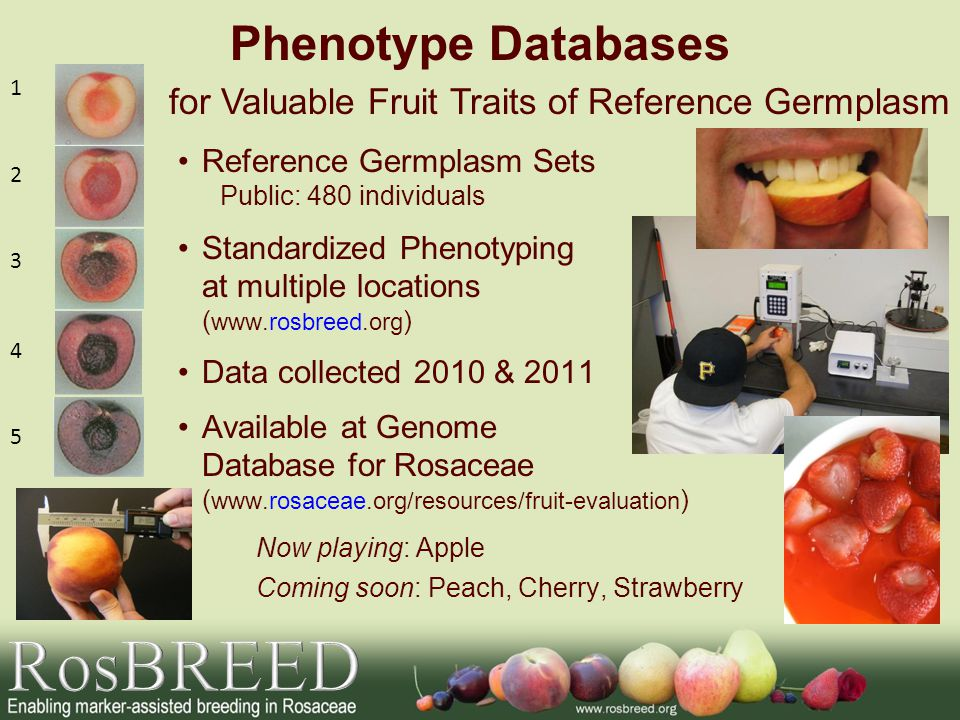 RosBREED Phenotype Databases