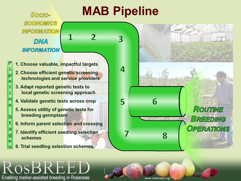 MAB Pipeline RosBREED