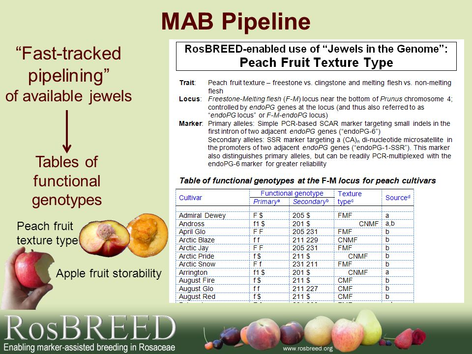 RosBREED MAB Pipeline Fast-tracked pipelining of available jewels