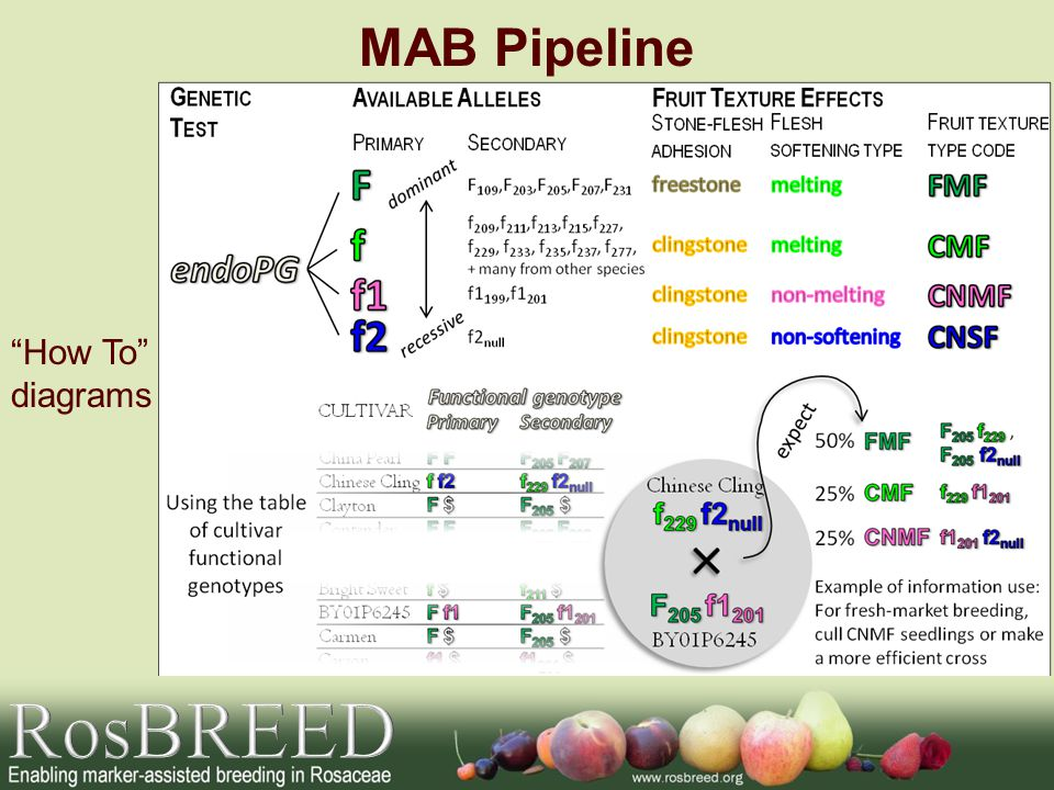 MAB Pipeline How To diagrams RosBREED