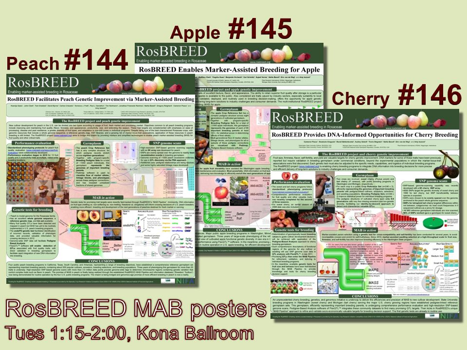 RosBREED MAB posters Apple #145 Peach #144 Cherry #146