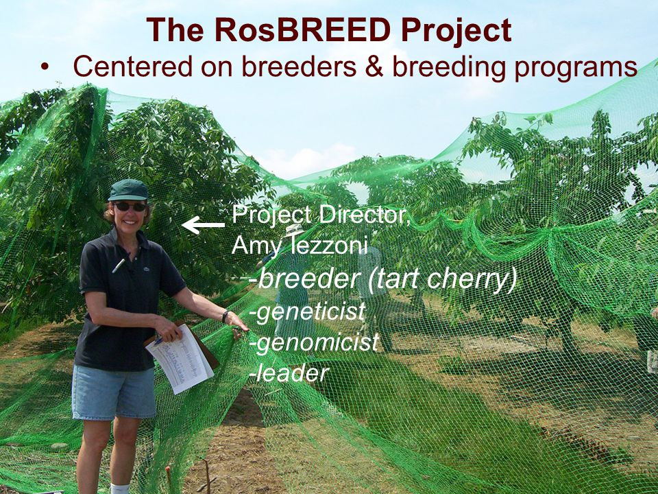 The RosBREED Project Centered on breeders & breeding programs