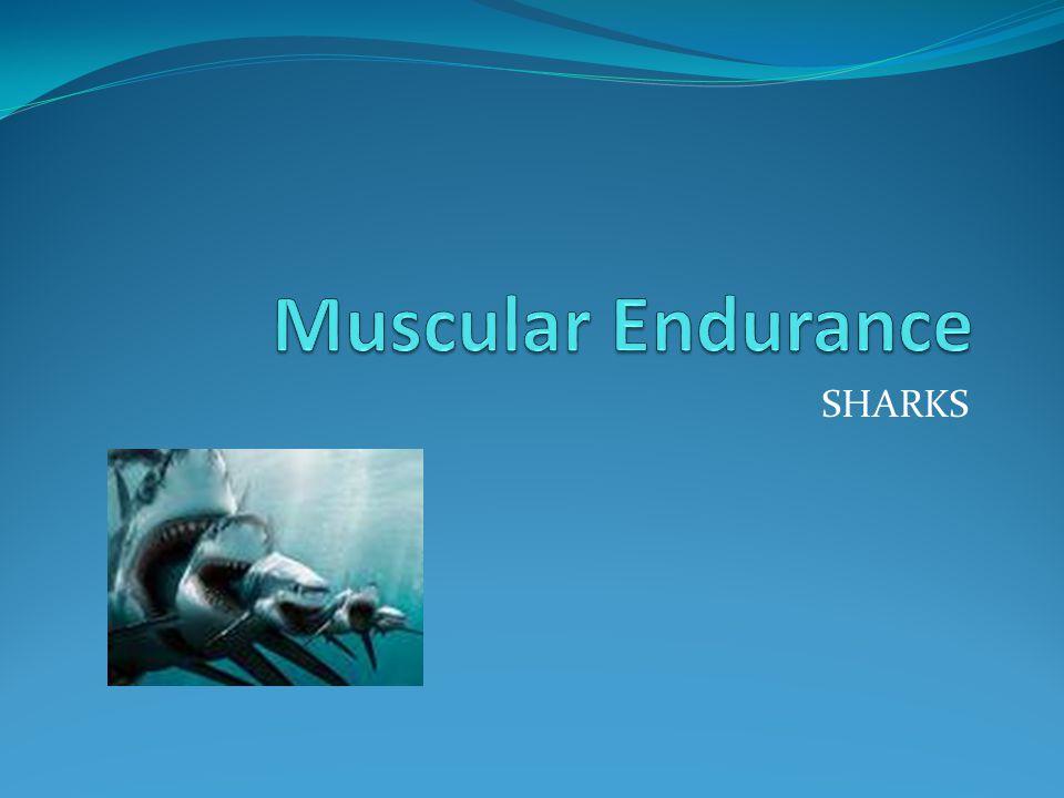 Muscular Endurance SHARKS
