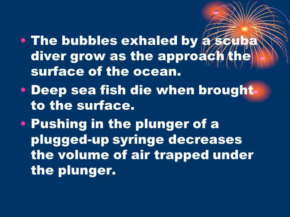 The bubbles exhaled by a scuba diver grow as the approach the surface of the ocean.