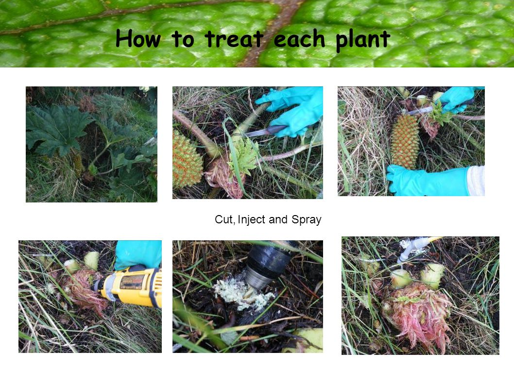 How to treat each plant Cut, Inject and Spray