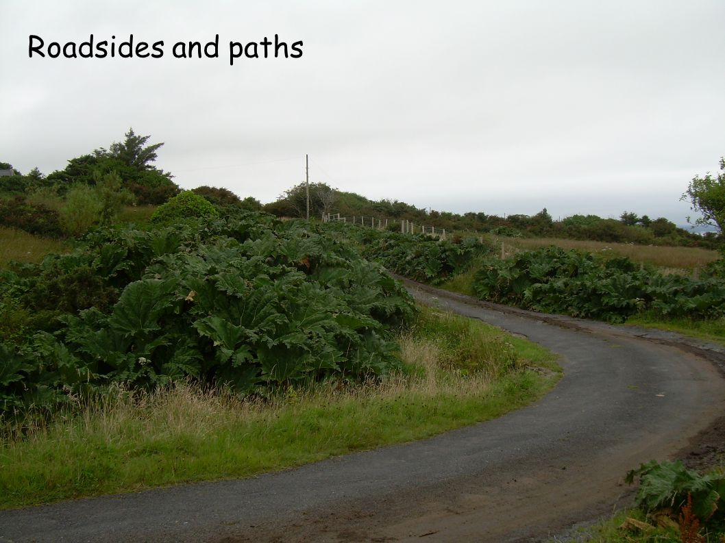 Roadsides and paths
