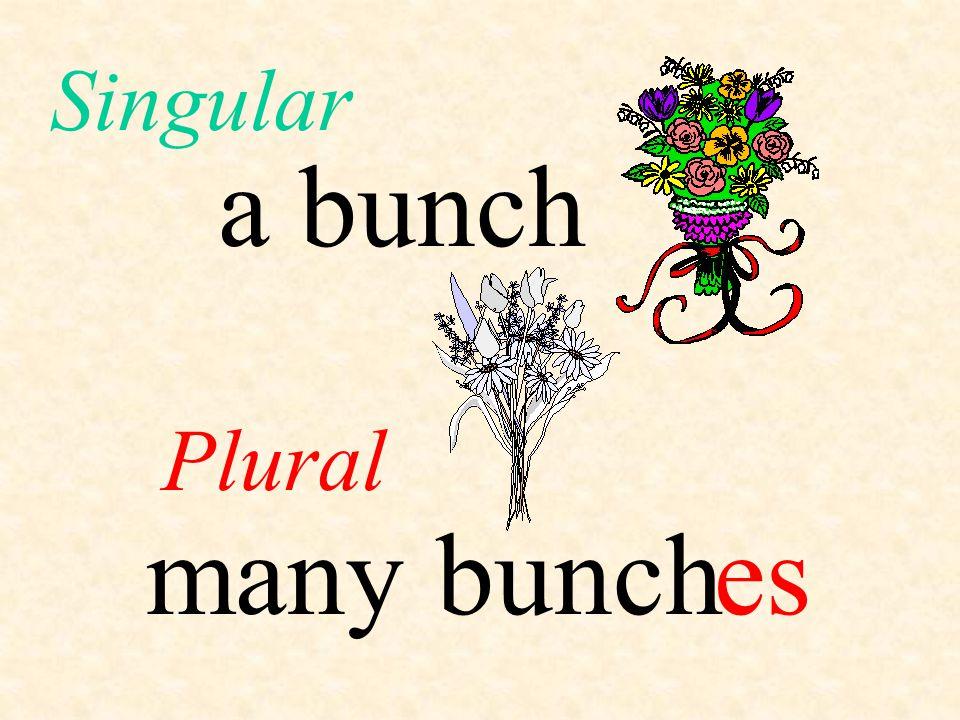 Singular a bunch Plural many bunch es