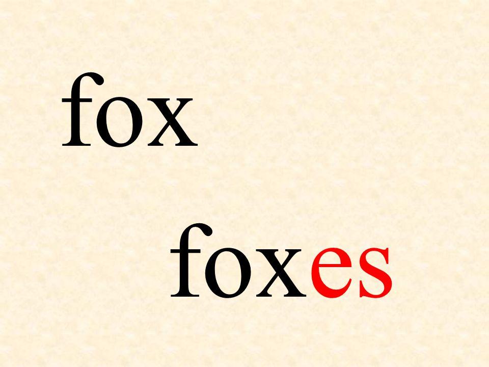 fox foxes