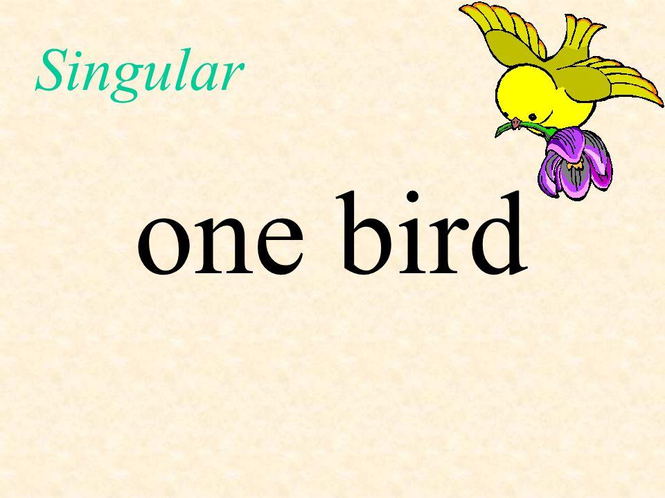 Singular one bird