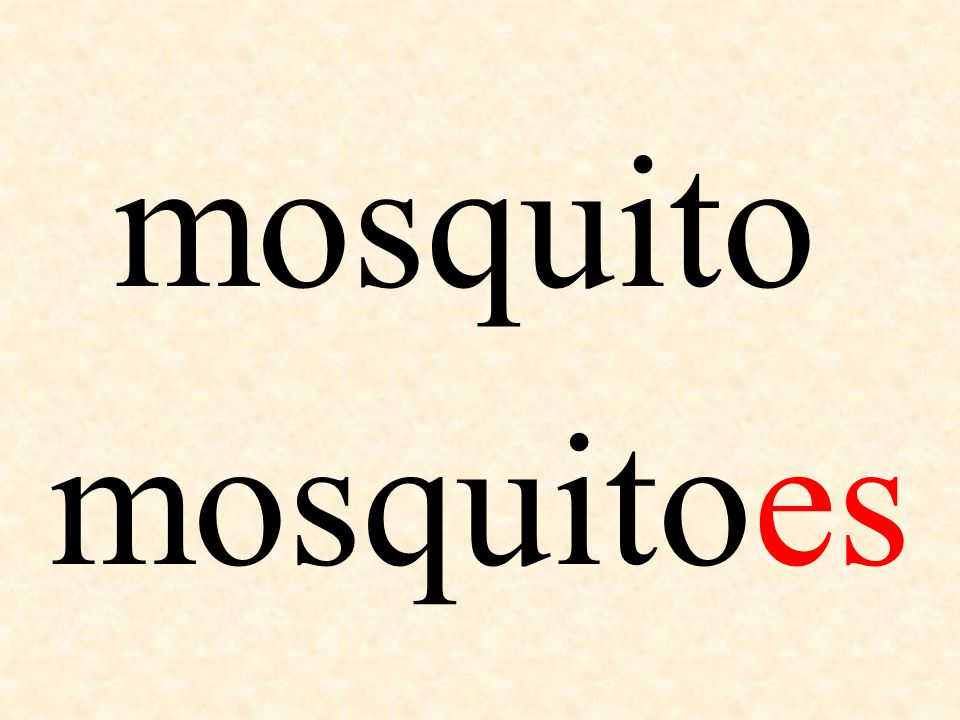 mosquito mosquitoes