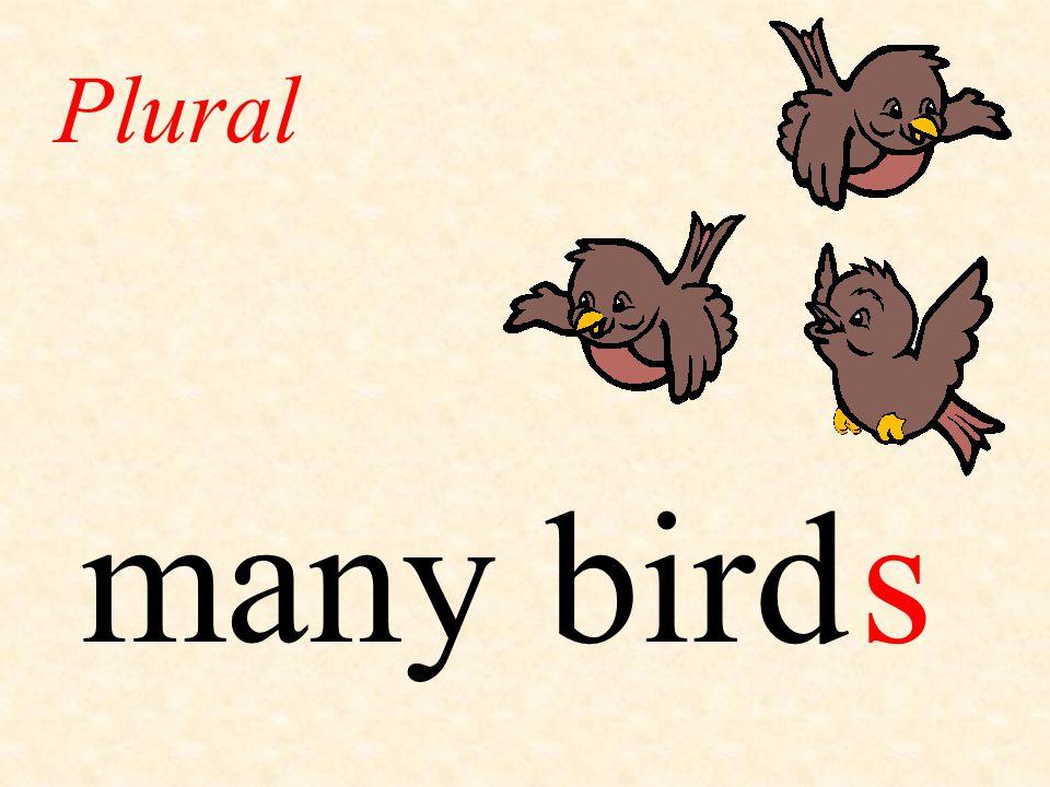 Plural many bird s