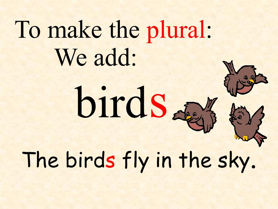 To make the plural: We add: s bird The birds fly in the sky.