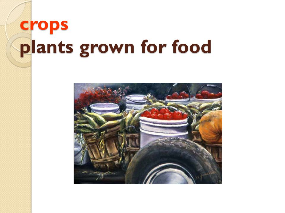 crops plants grown for food