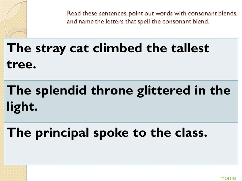The stray cat climbed the tallest tree.