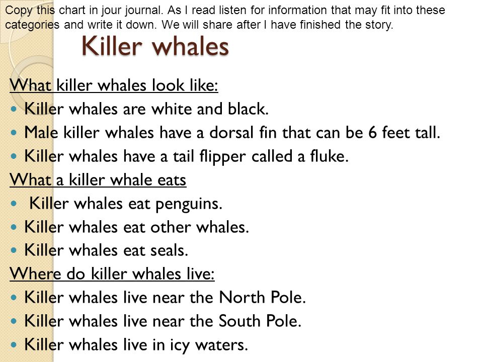 Killer whales What killer whales look like: