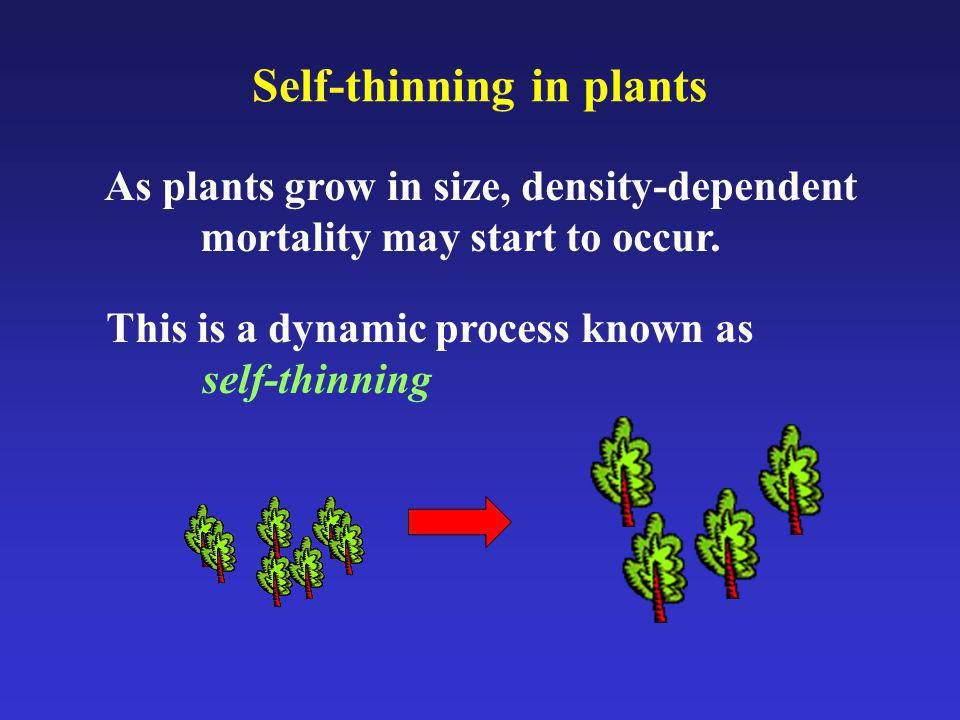 Self-thinning in plants