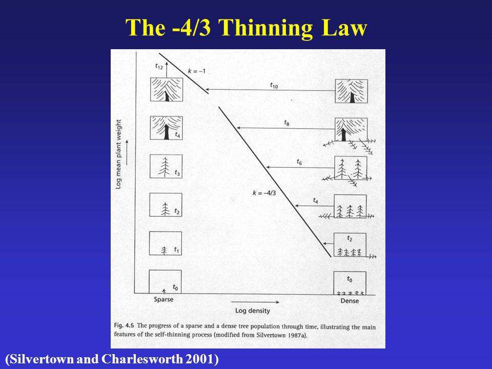 The -4/3 Thinning Law (Silvertown and Charlesworth 2001)