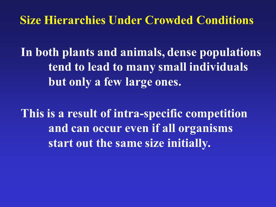 Size Hierarchies Under Crowded Conditions