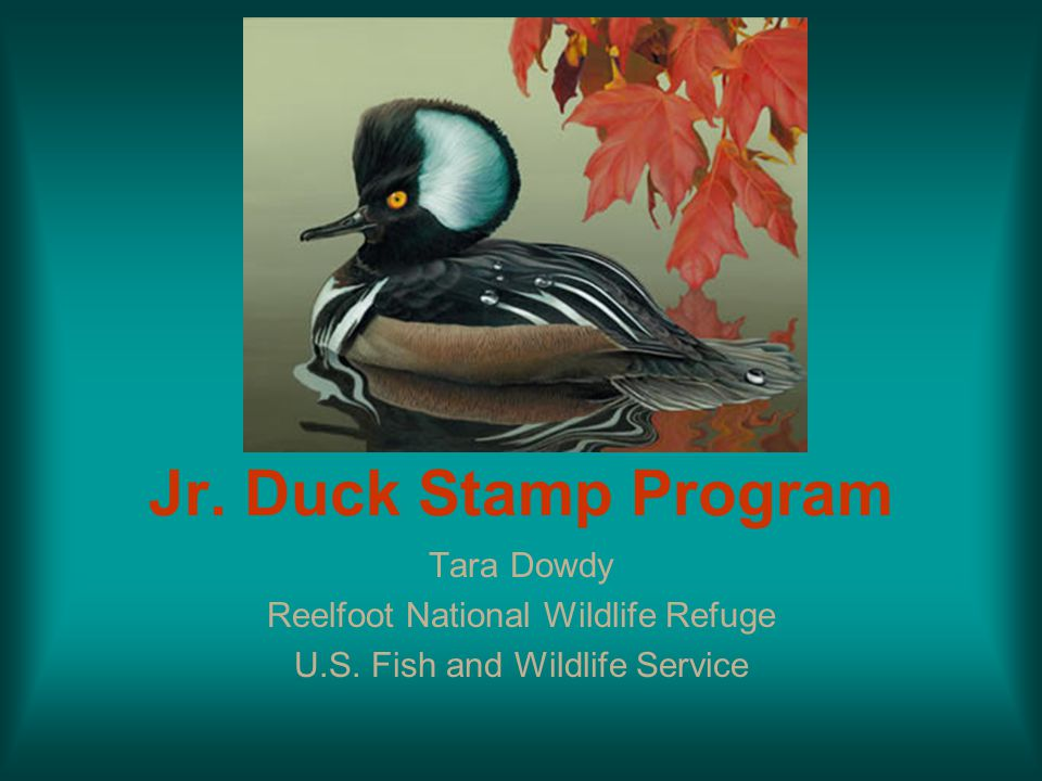 Jr. Duck Stamp Program Tara Dowdy Reelfoot National Wildlife Refuge