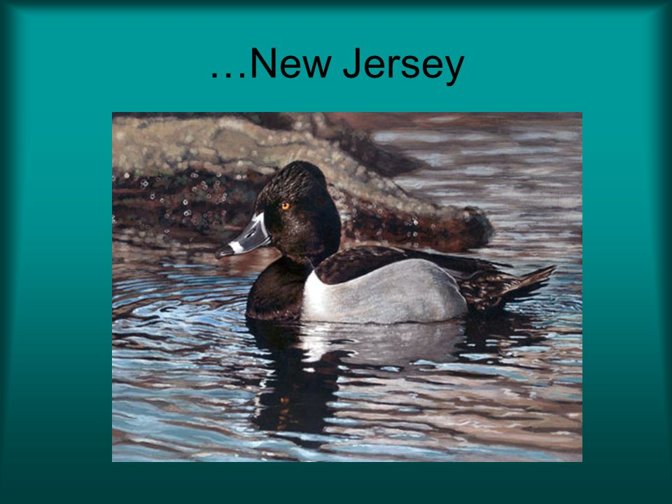 …New Jersey And no…this is not a photograph 