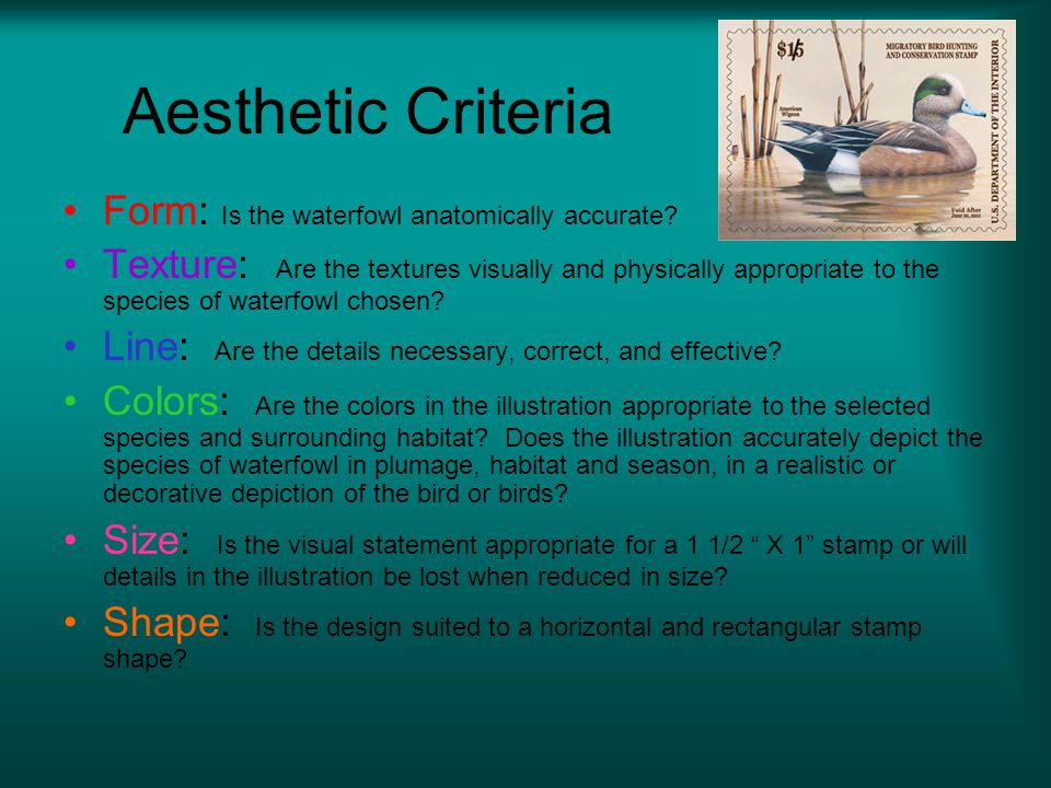 Aesthetic Criteria Form: Is the waterfowl anatomically accurate