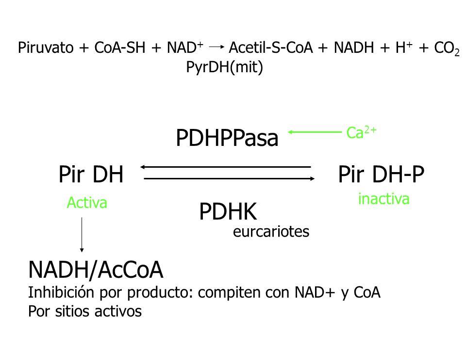 PDHPPasa Pir DH Pir DH-P PDHK NADH/AcCoA