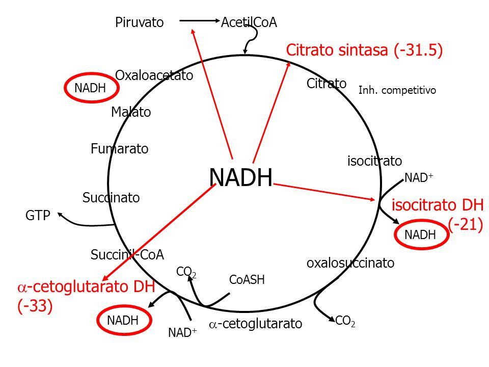 NADH Citrato sintasa (-31.5) isocitrato DH (-21) a-cetoglutarato DH