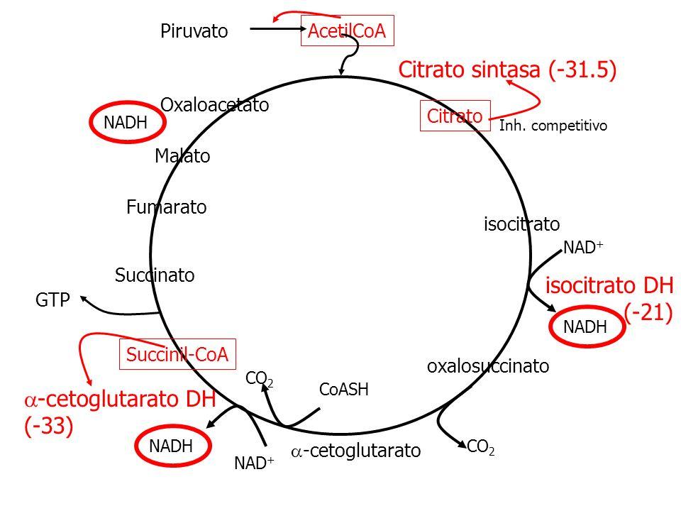 Citrato sintasa (-31.5) isocitrato DH (-21) a-cetoglutarato DH (-33)