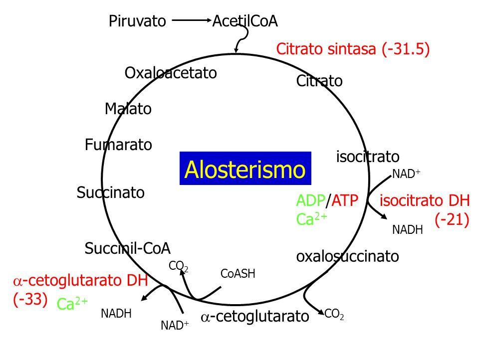 Alosterismo Citrato isocitrato a-cetoglutarato Succinil-CoA Succinato