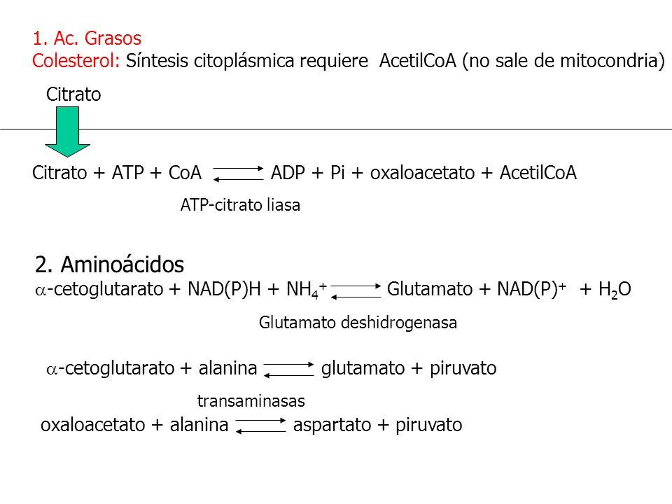 1. Ac. Grasos Colesterol: Síntesis citoplásmica requiere AcetilCoA (no sale de mitocondria)