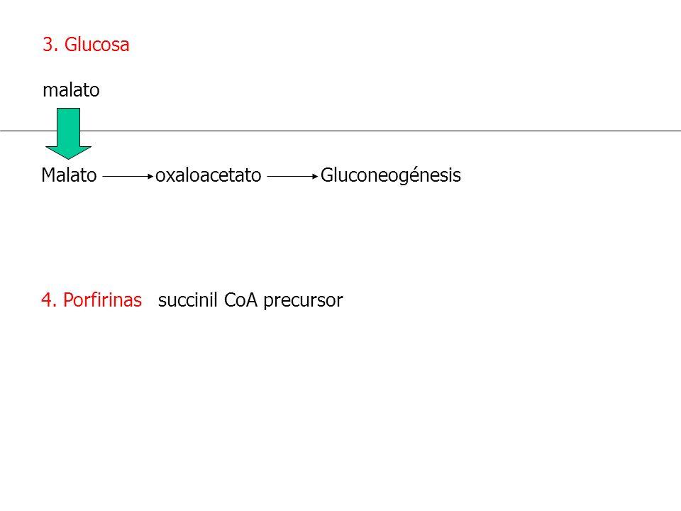 3. Glucosa malato. Malato oxaloacetato Gluconeogénesis.