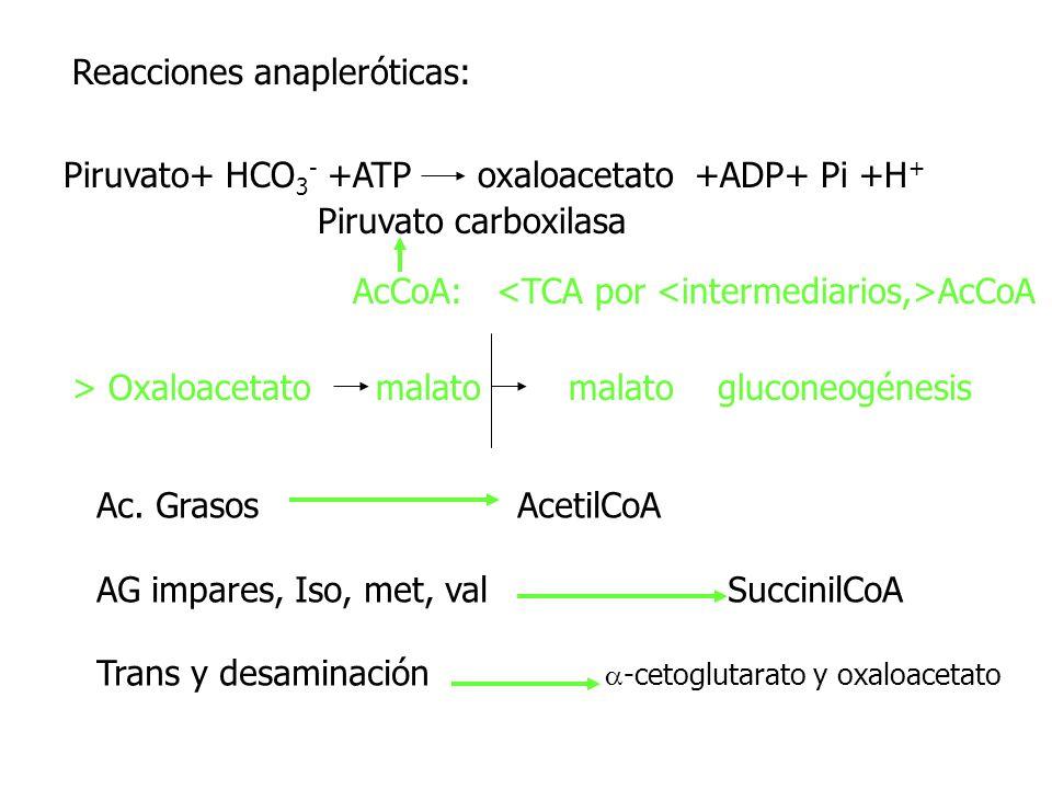 Reacciones anapleróticas: