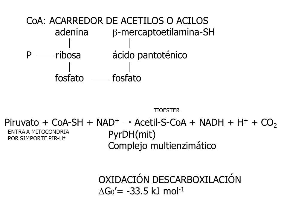 CoA: ACARREDOR DE ACETILOS O ACILOS adenina b-mercaptoetilamina-SH