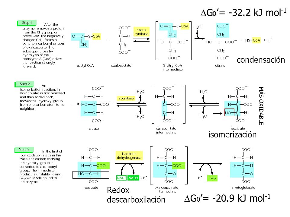 DG0'= -32.2 kJ mol-1 DG0'= -20.9 kJ mol-1 condensación isomerización