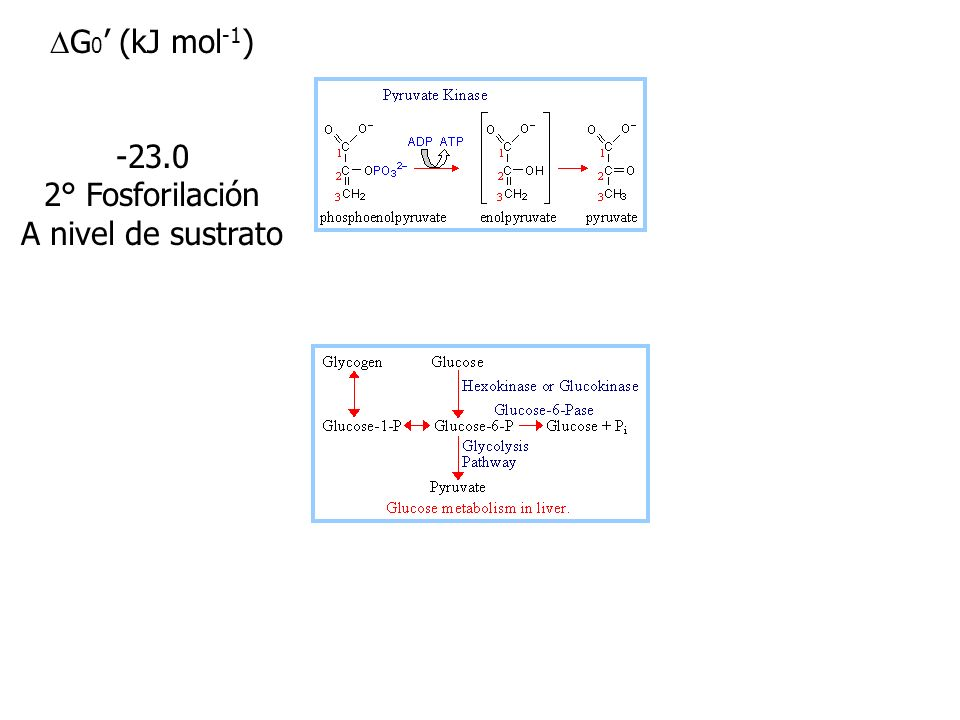 DG0' (kJ mol-1) -23.0 2° Fosforilación A nivel de sustrato