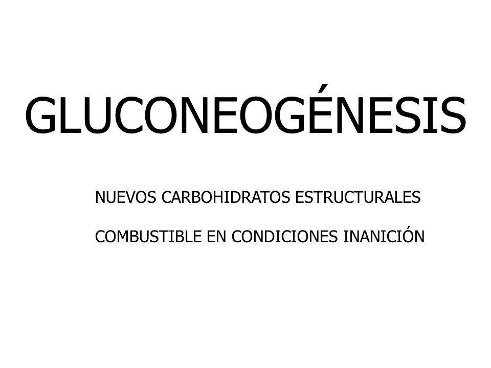 GLUCONEOGÉNESIS NUEVOS CARBOHIDRATOS ESTRUCTURALES