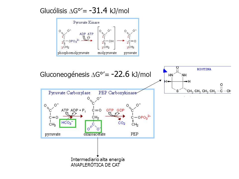 Glucólisis DG°'= -31.4 kJ/mol