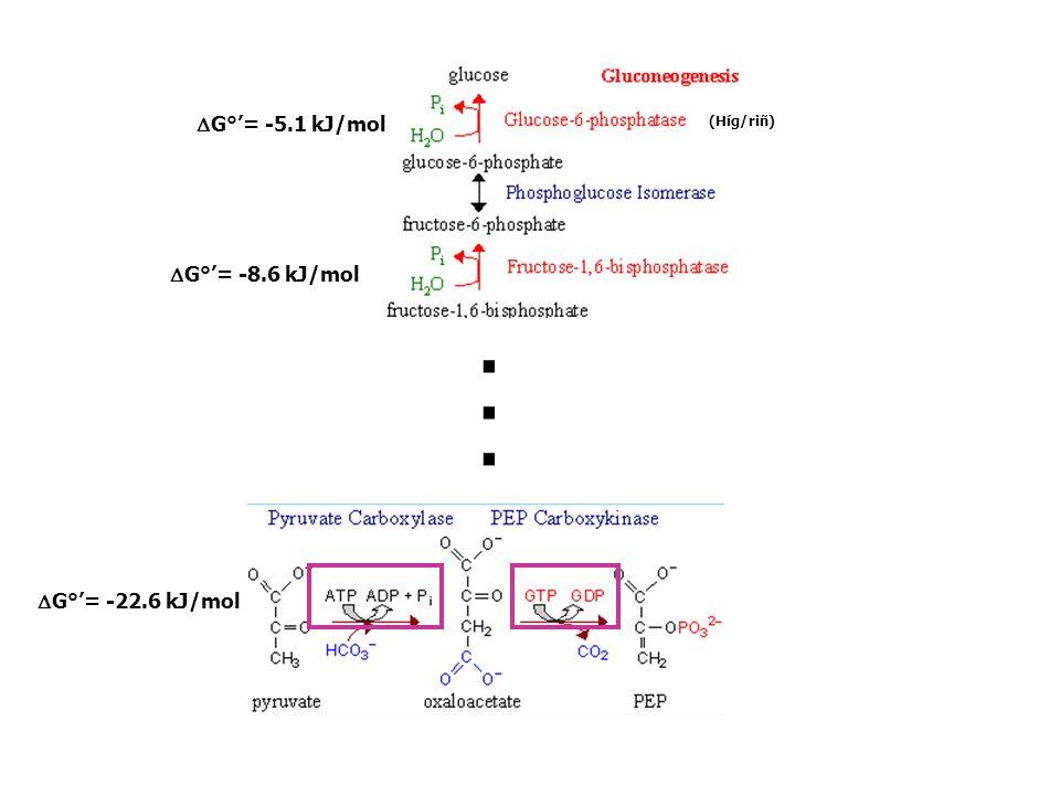 DG°'= -8.6 kJ/mol DG°'= -5.1 kJ/mol (Híg/riñ) . DG°'= -22.6 kJ/mol