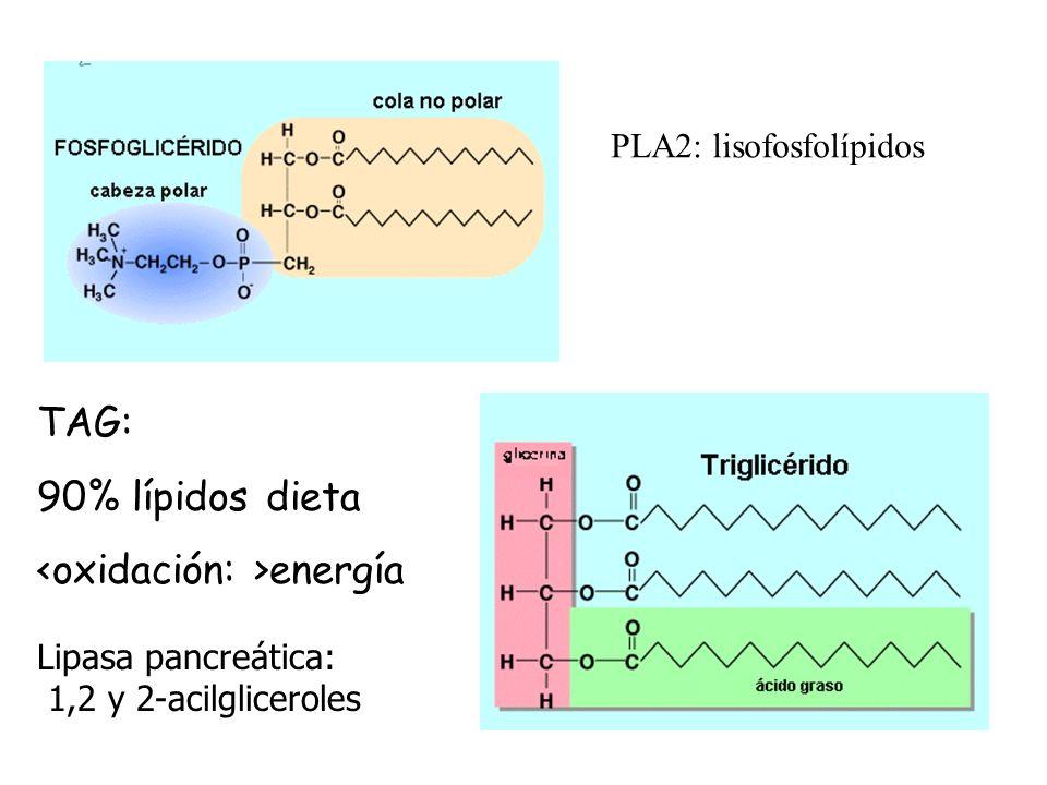 <oxidación: >energía