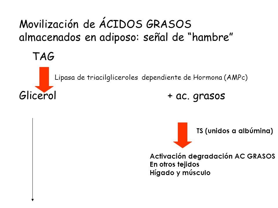 Lipasa de triacilgliceroles dependiente de Hormona (AMPc)