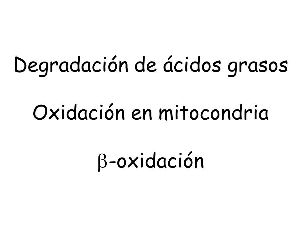 Degradación de ácidos grasos Oxidación en mitocondria b-oxidación