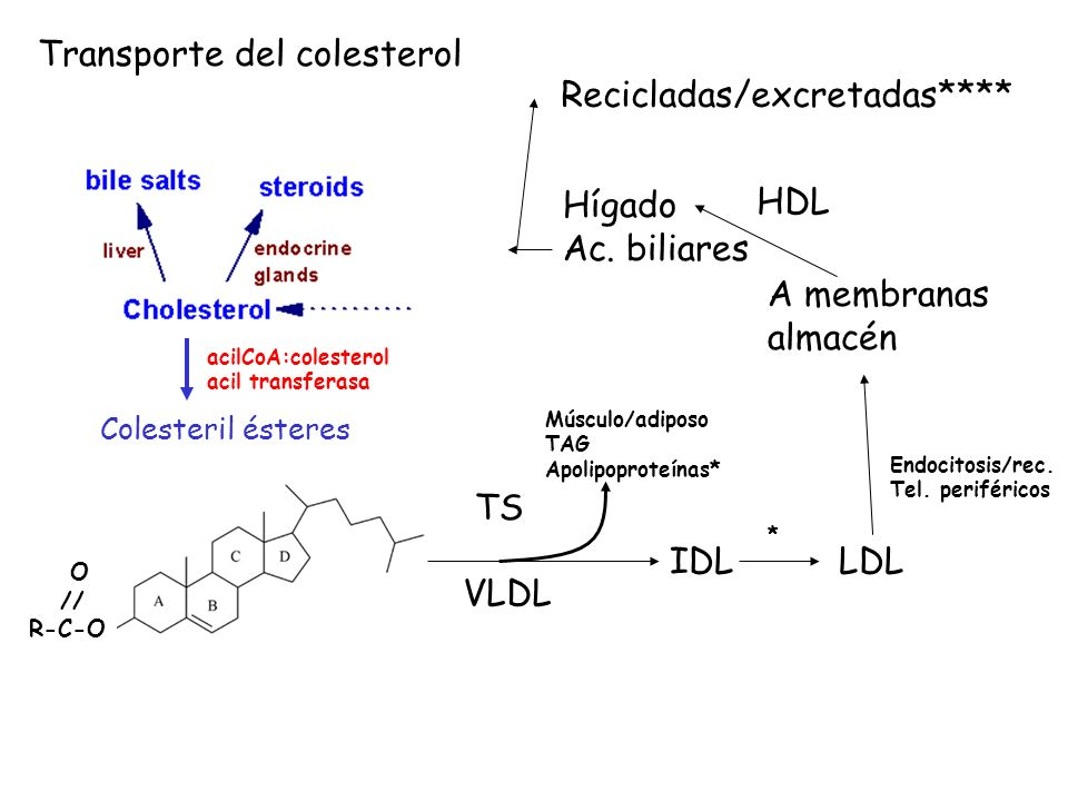 Transporte del colesterol Recicladas/excretadas****