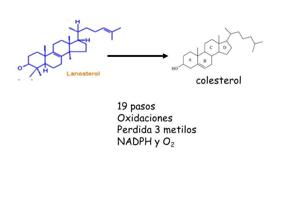 colesterol 19 pasos Oxidaciones Perdida 3 metilos NADPH y O2