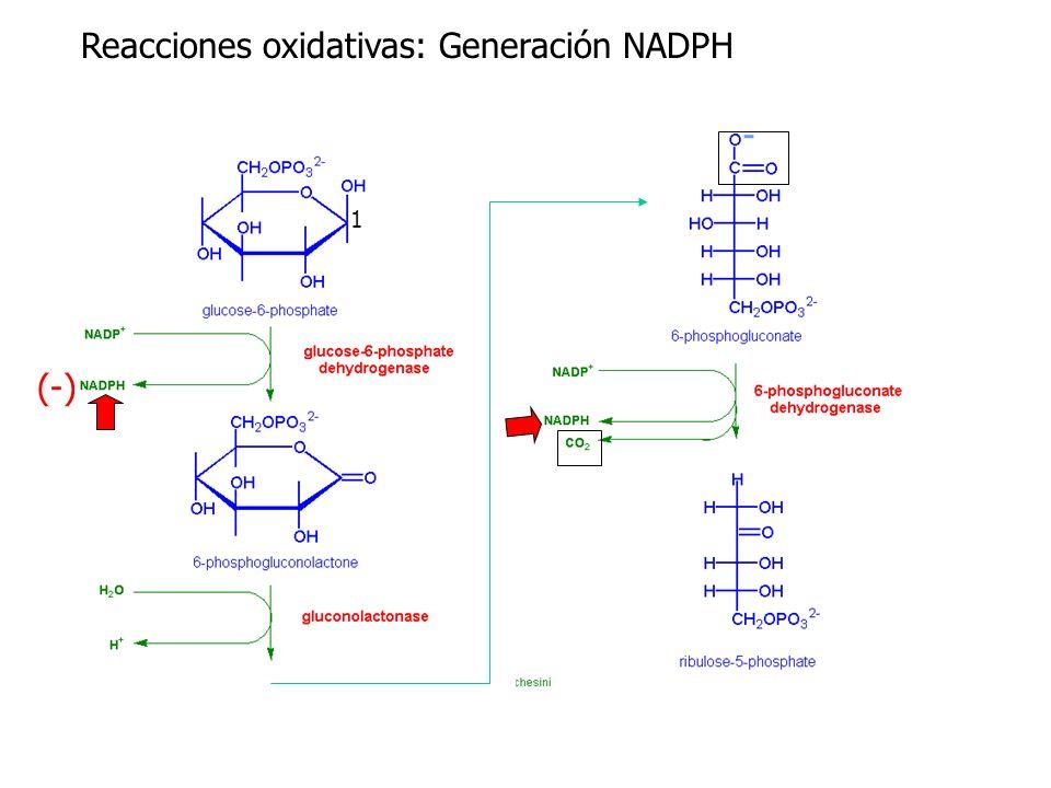 Reacciones oxidativas: Generación NADPH