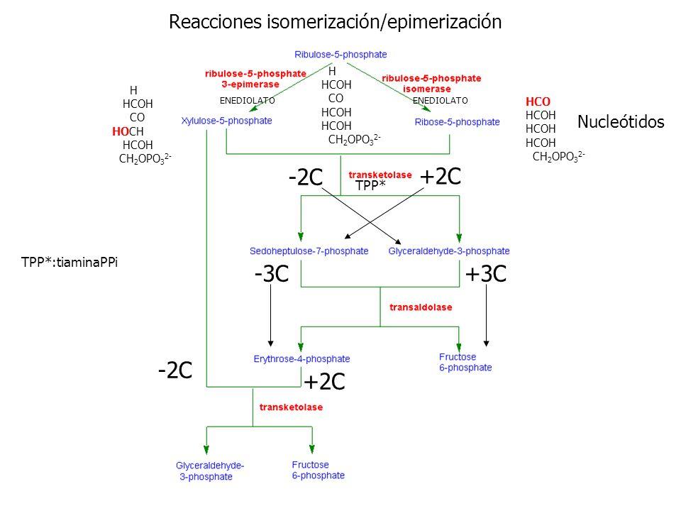 -2C +2C -3C +3C Reacciones isomerización/epimerización Nucleótidos