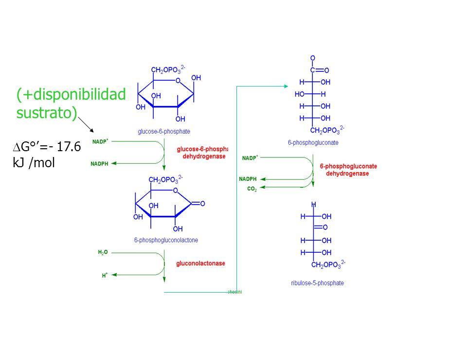 (+disponibilidad sustrato) DG°'=- 17.6 kJ /mol