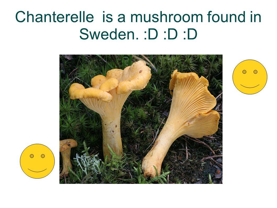 Chanterelle is a mushroom found in Sweden. :D :D :D