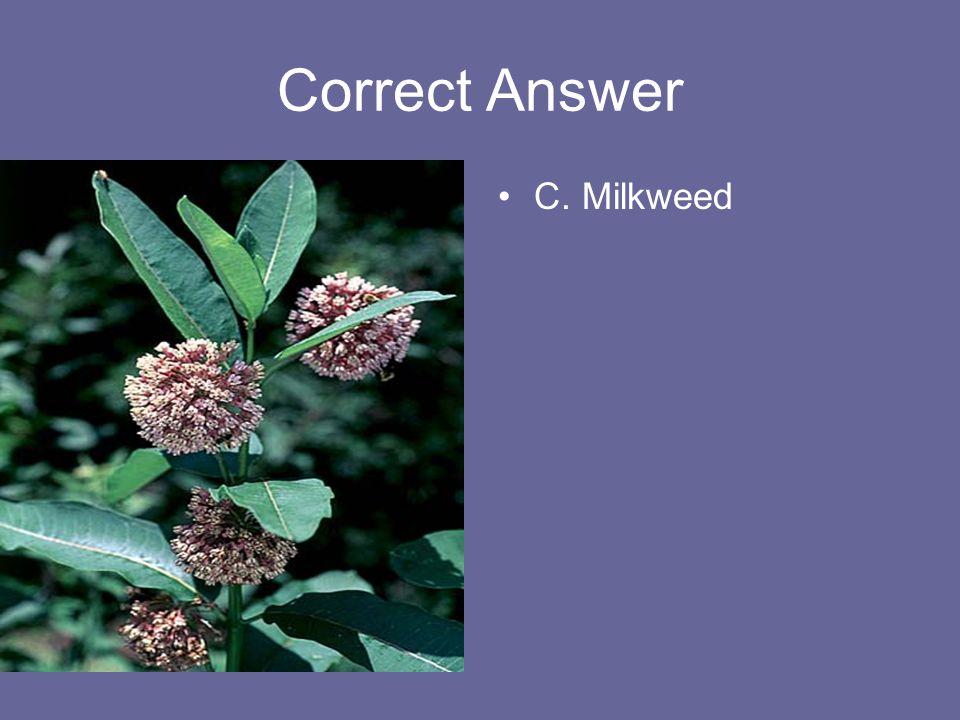Correct Answer C. Milkweed