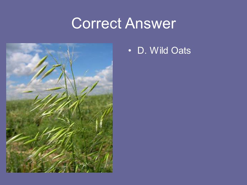Correct Answer D. Wild Oats